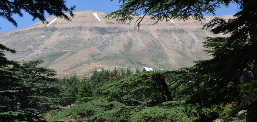 Liban fot. Adam Rosłoniec